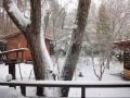 春の雪-2