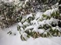 春の雪-3