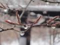 春の雪-4