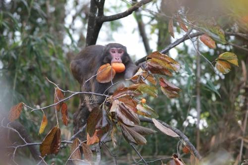 猿柿mネ032A5437 3