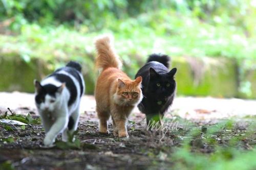 散歩中3猫ネイム032A4607