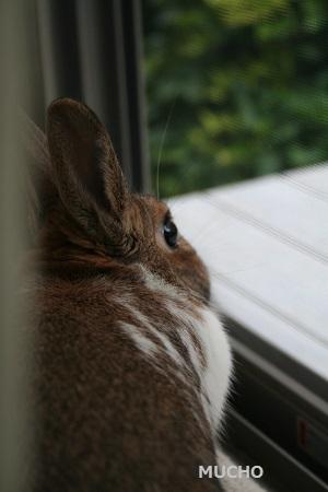 窓際のムーチョ01