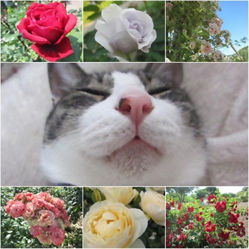 cats優雅