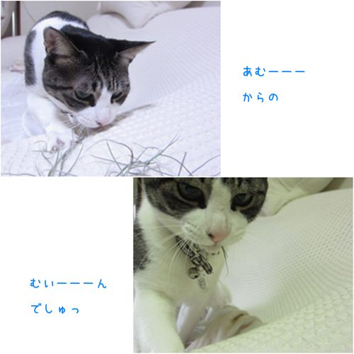 catsあむ