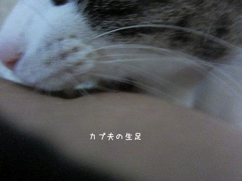 IMG_6661 2015 7 (408)
