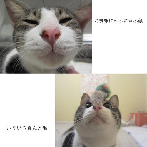 catsまんまる