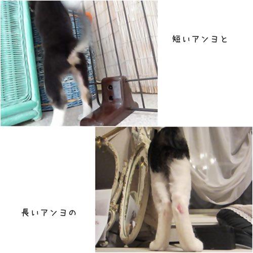 cats1_20150708164616be4.jpg