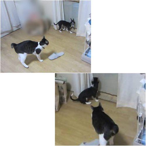 cats1_20150708184029e21.jpg