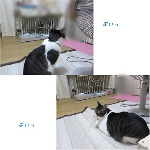 cats1_20150708204527c7a.jpg