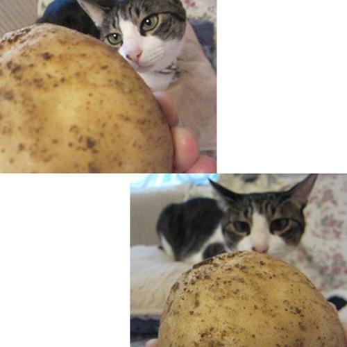 cats1_20150717194643a90.jpg