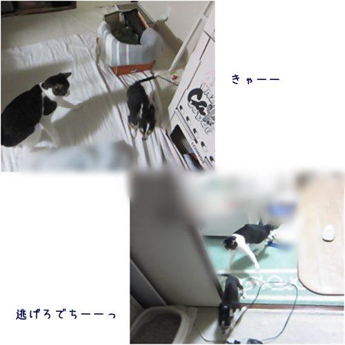 cats_201507081840287a6.jpg