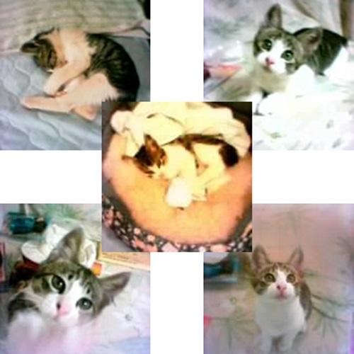 cats_20150718161234594.jpg