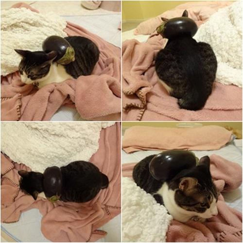 cats_20150719200938923.jpg