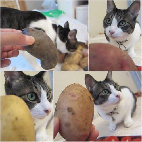 cats_20150720151632f39.jpg