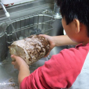 2014年12月-椎茸栽培0日目-02