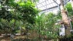 熱帯植物3