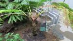 熱帯植物4