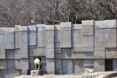 201504円山動物園 (3)