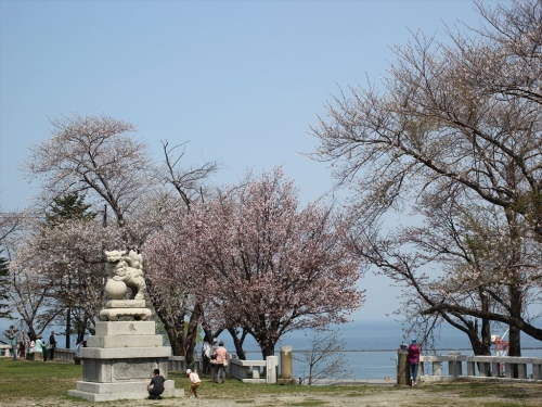 2015小樽桜 (20)_R