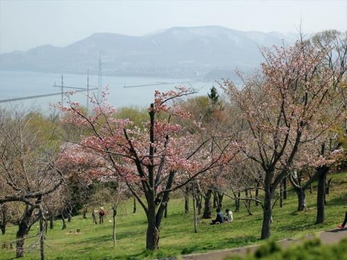 2015小樽桜 (39)_R
