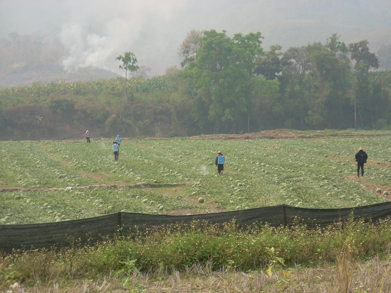 スイカ栽培での農薬散布