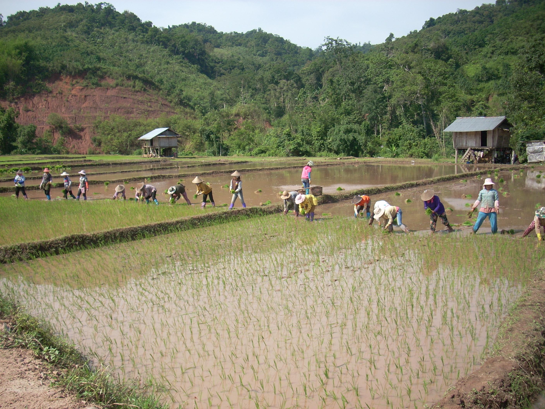 昔ながらの田植えの風景