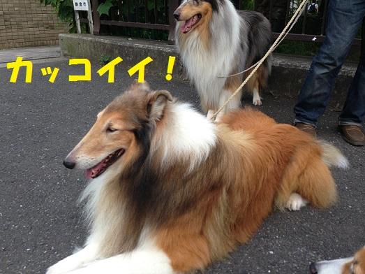 サニシリちゃん3