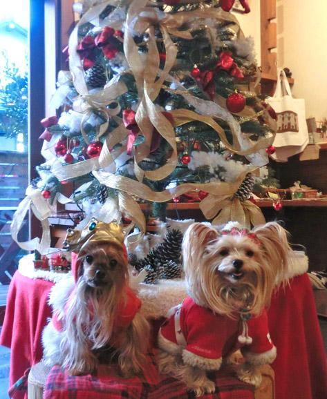 8クリスマスツリーといっしょに