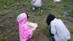 子供とママのイチゴ狩り