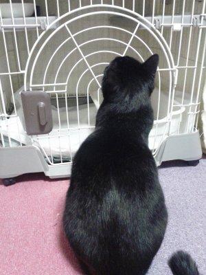 新入りさんを見つめる黒ちび