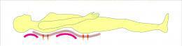 仰向き寝体型ライン