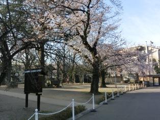 お寺の桜 border=