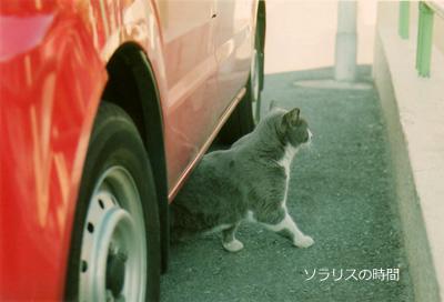 987東京2月yanesen猫5new