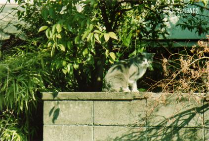 987東京2月yanesen猫3new