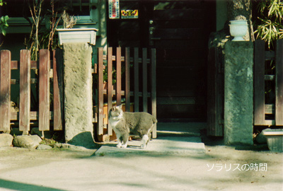 987東京2月yanesen猫1new