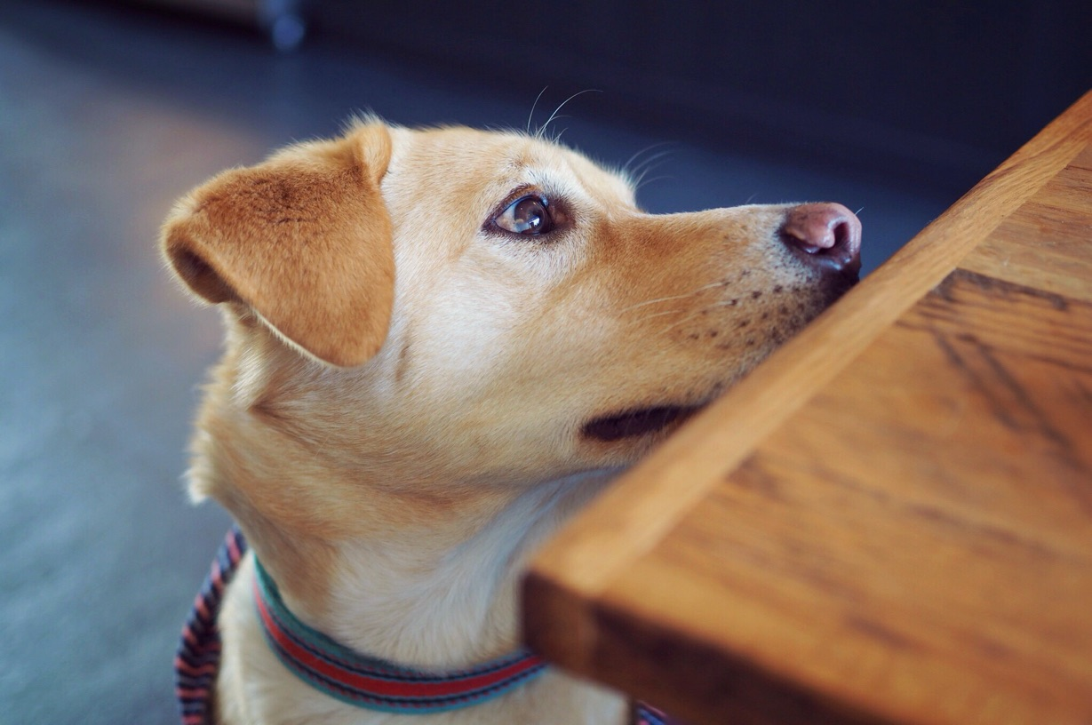 アライズコーヒーエンタングル 犬 わんこ