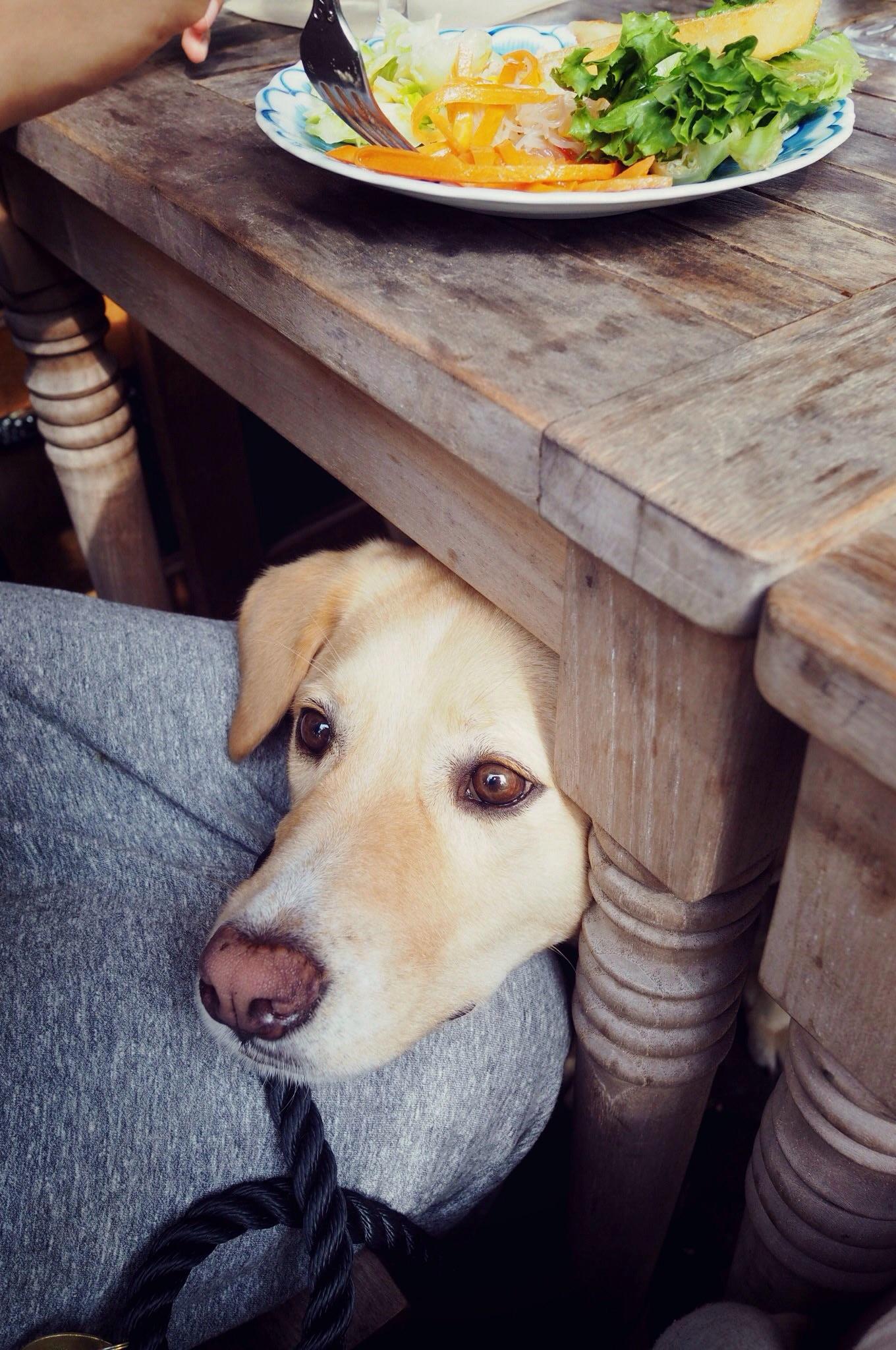 アーヴィングプレイス わんこ 犬
