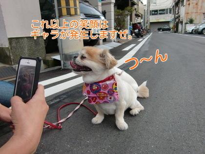 nL3XwUBvL_ipH8g1438007287_1438007592.jpg