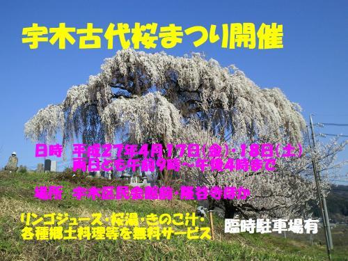 27年古代桜まつりポスター(27.4.9)