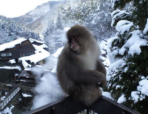 歓迎猿(26.12.31)