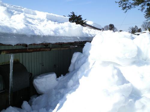 おろした雪(27.2.11)