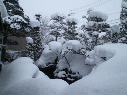 15日家の庭(27.2.15)
