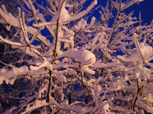 着雪(27.2.20)