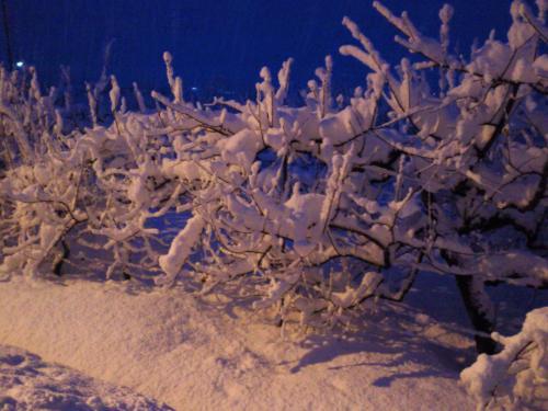 リンゴの枝にも着雪(27.2.20)