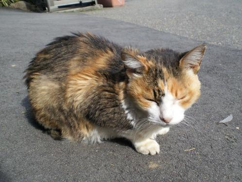 駅猫さん(27.2.28)