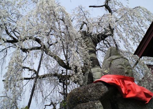 隆谷寺のしだれ桜とお地蔵様(27.4.18)