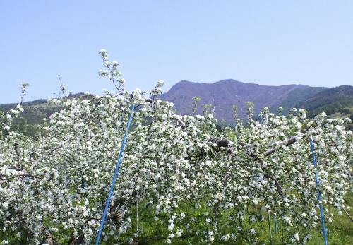 高社山とリンゴの花(27.5.2)