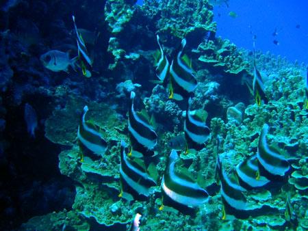 62415fish2.jpg