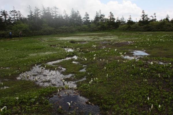 山人平湿原 1