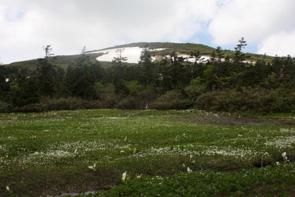 山人平湿原 2